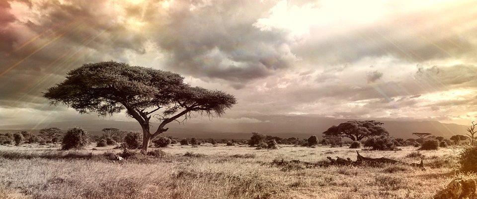 Dovolená v Africe
